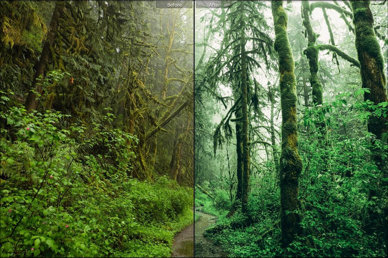 手机版喜怒无常复古Lightroom预设森林/丛林预置包插图4